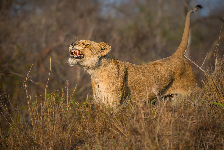 Africa: Wildlife
